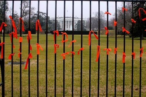 166 ribbons tied to the ellipse at the White House/January 11th, 2013/Witness Against Torture